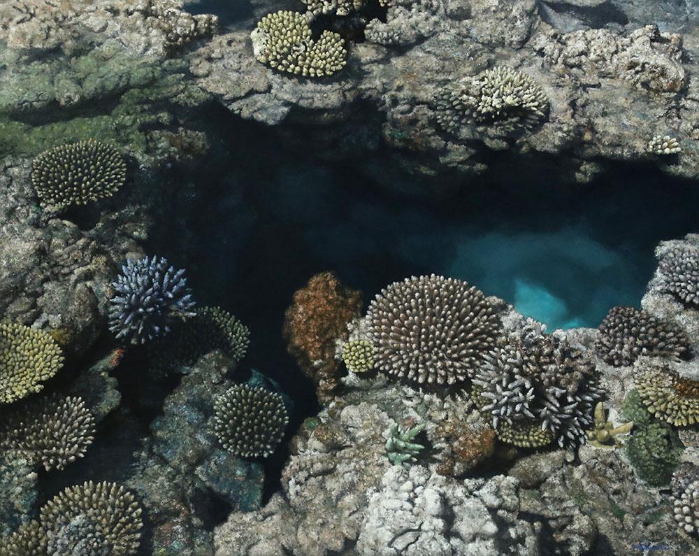 新潟の画家|橋本直行|珊瑚礁